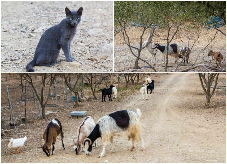 agriturismo animaux