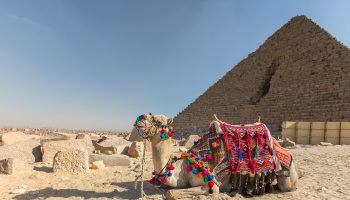 egypte-caire-chameau-video-header
