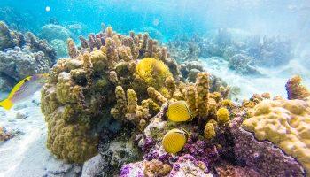 polynesie-plongee-experience