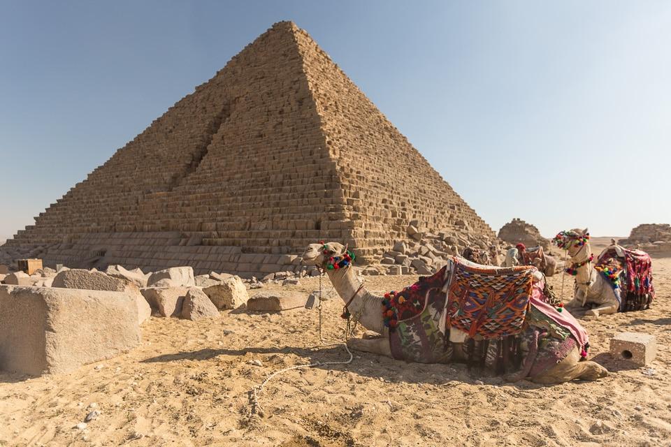 chameaux pyramides