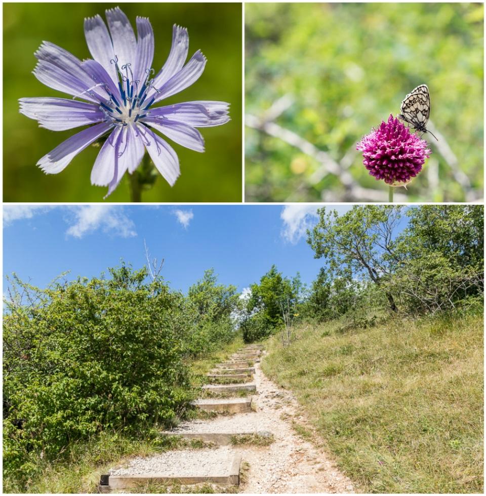 fleurs escalier mouthier