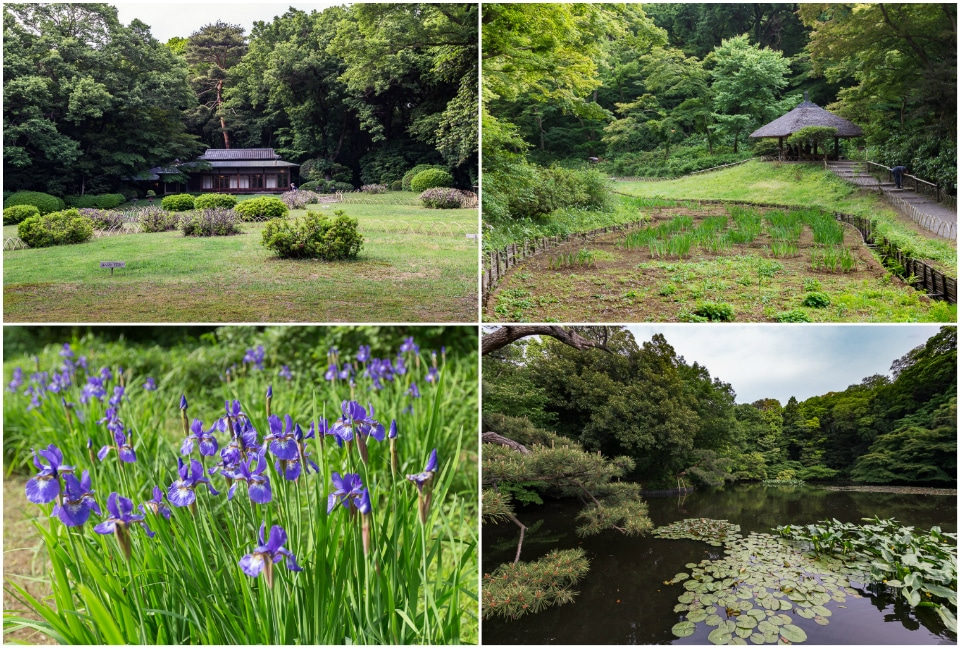 jardin meiji jingu