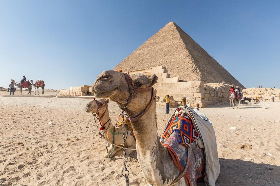 traitement animaux egypte
