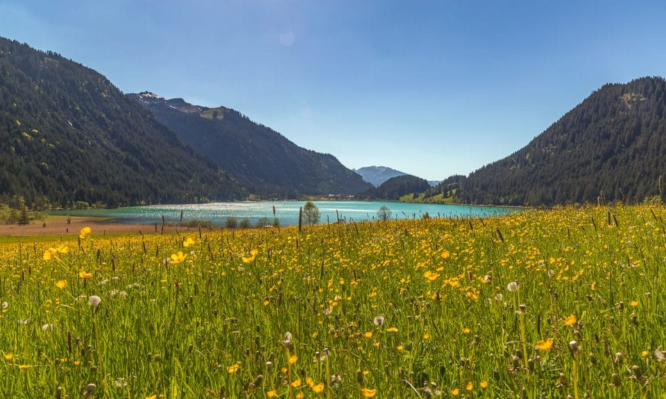 lac d'autriche et ses fleurs