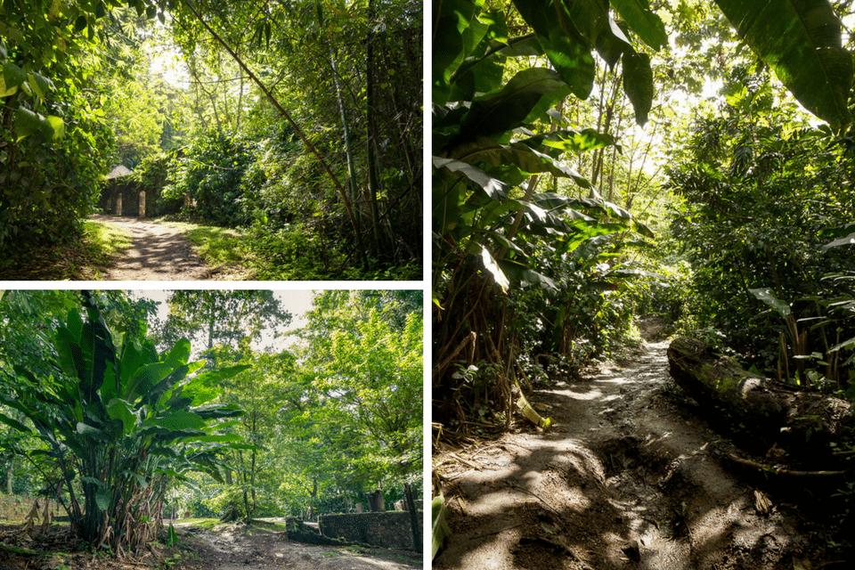 jungle tropicale martinique