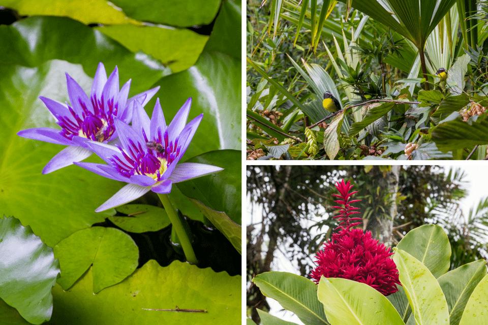 martinique jardin botanique