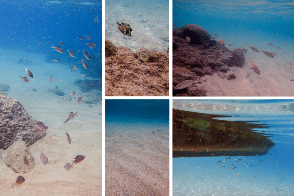 snorkeling anse dufour