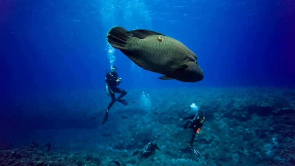 polynesie-Tikehau-01