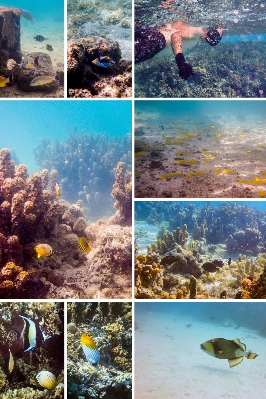 polynesie-maupiti-snorkeling