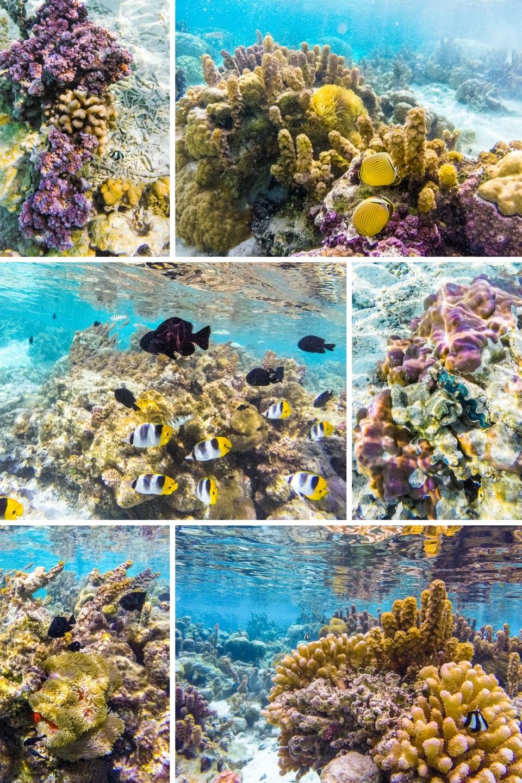 polynesie-tahaa-corail