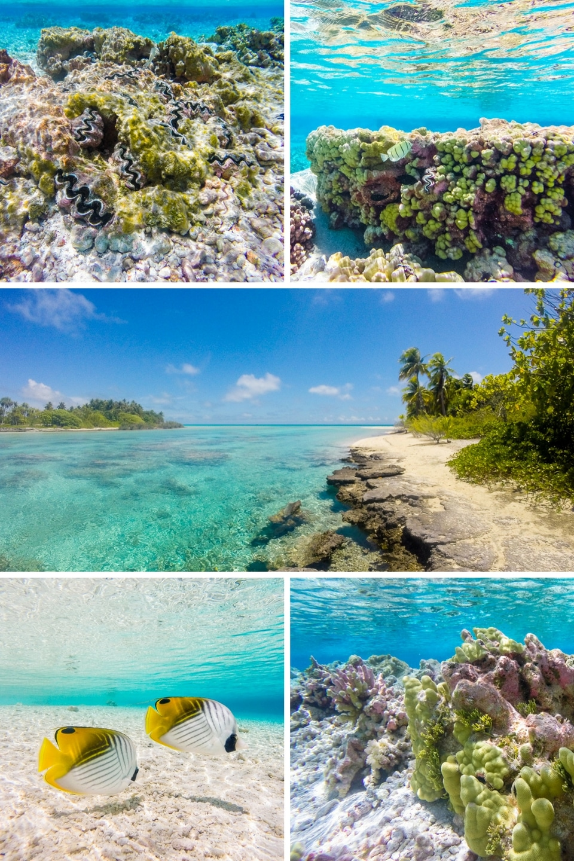 rangiroa-jardin-de-corail