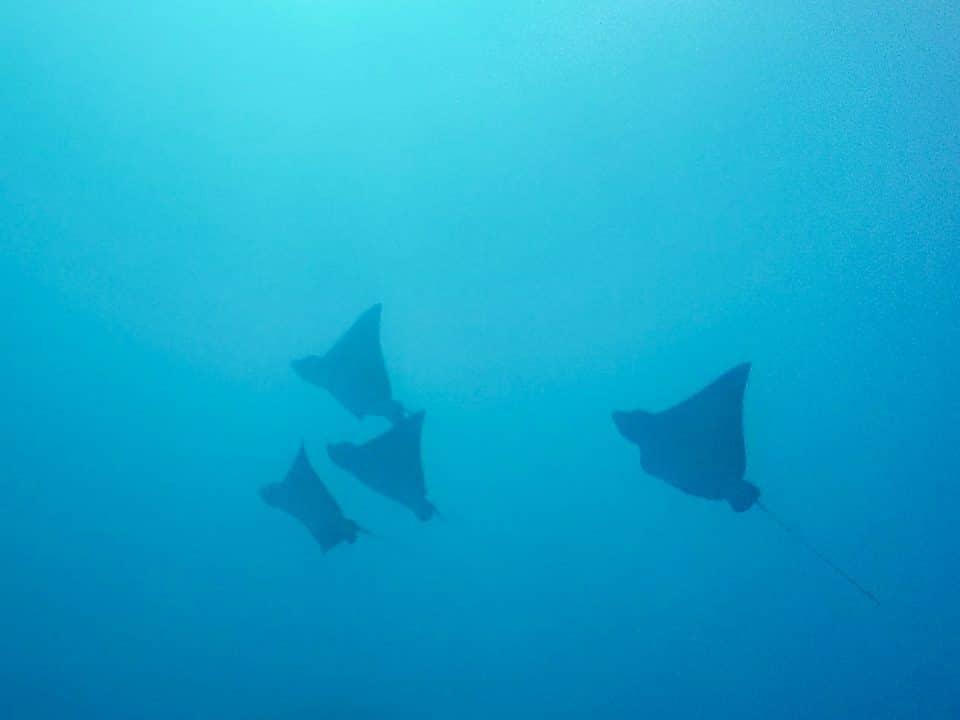 polynesie-moorea-30