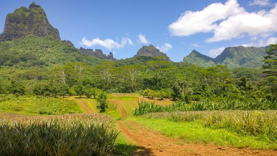 polynesie-moorea-38