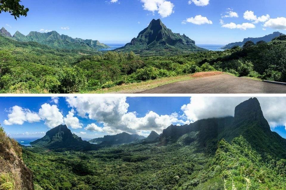 polynesie-moorea-cocotiers