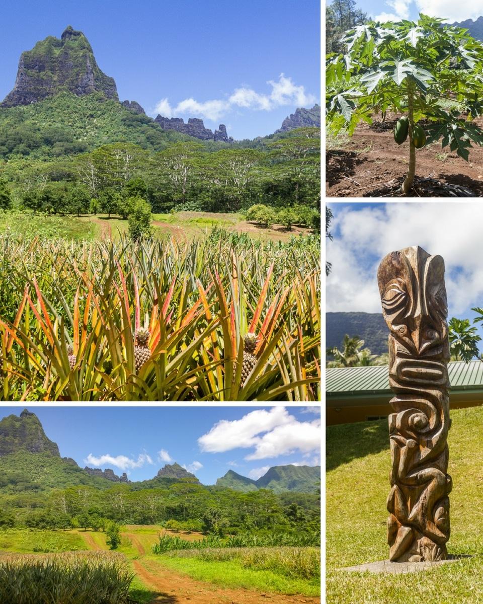 polynesie-moorea-lycee