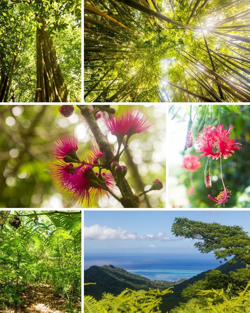 polynesie-moorea-rando