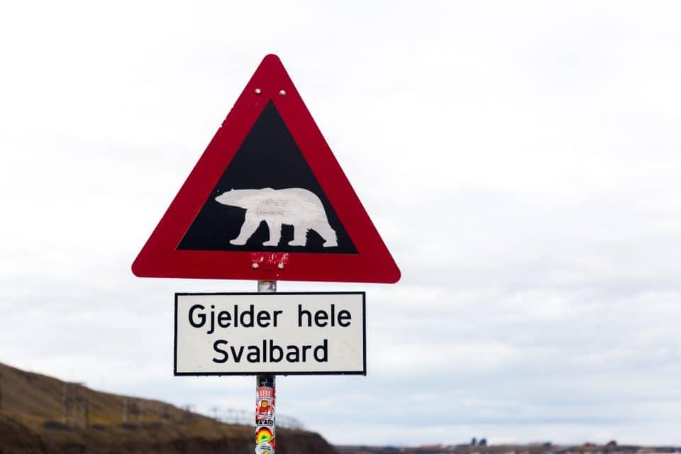 norvege-spitzberg-ours
