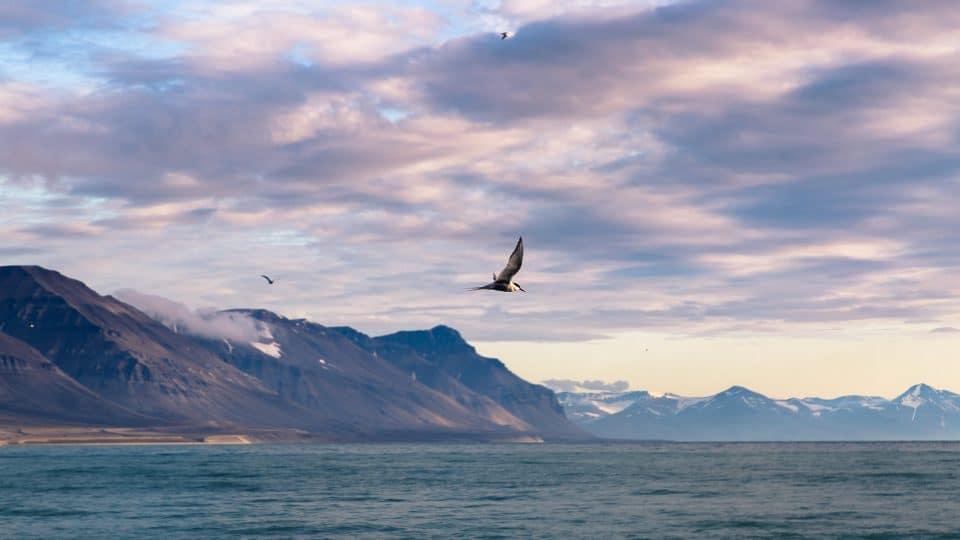 norvege-spitzberg-oiseau
