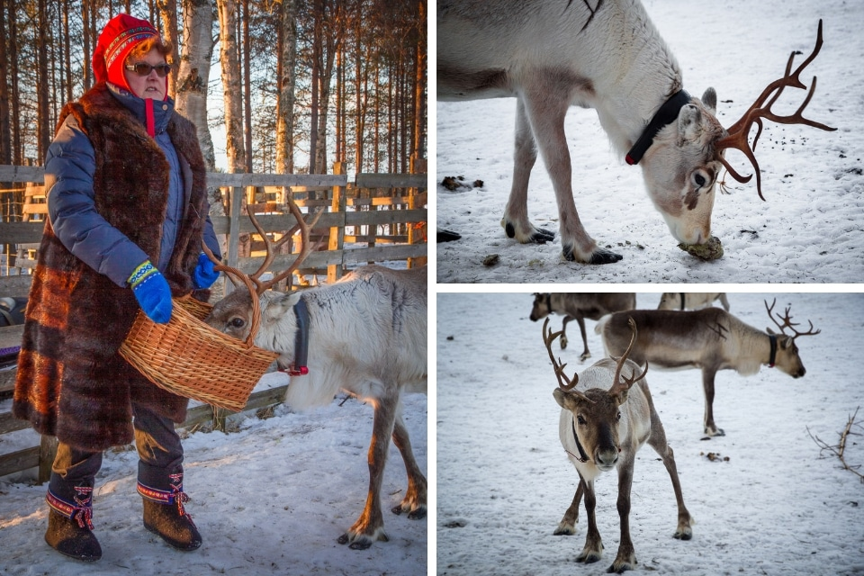 finlande-laponie-rennes