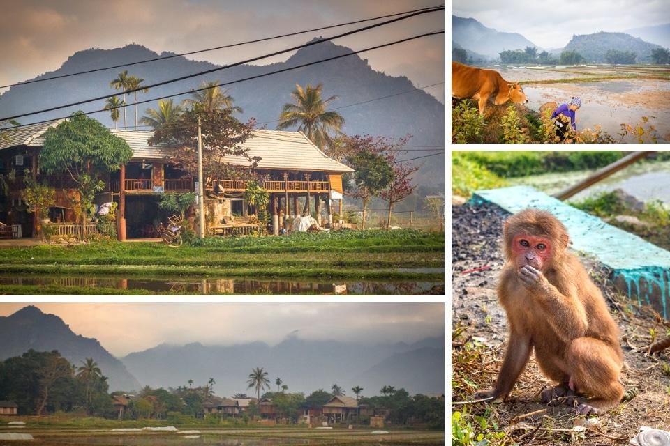 Vietnam maichau