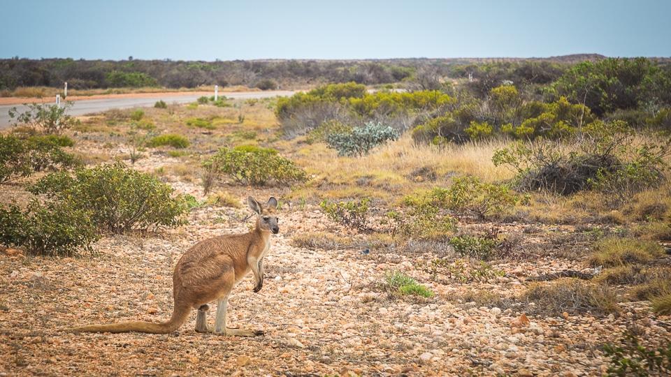 australie-ouest-ningaloo-cap-ranges-18