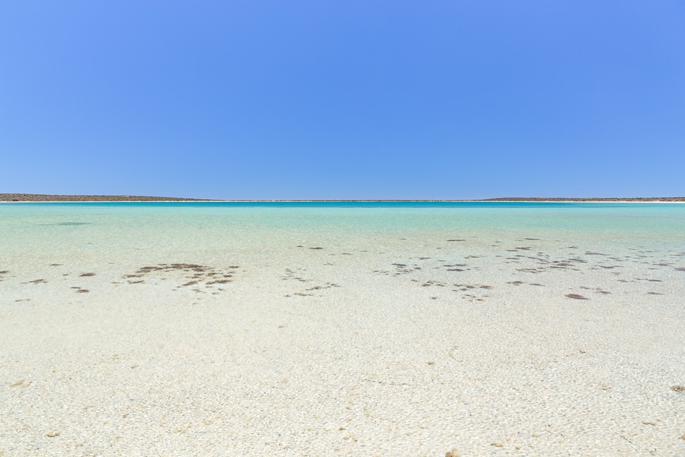 australie-ouest-shark-bay-44