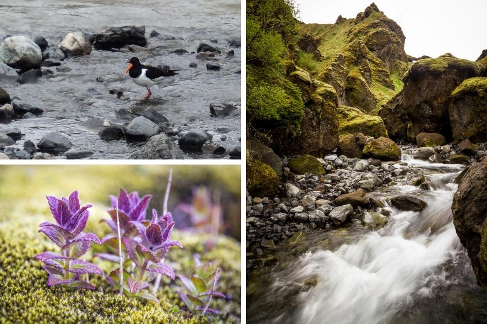 islande-canyon-porsmork