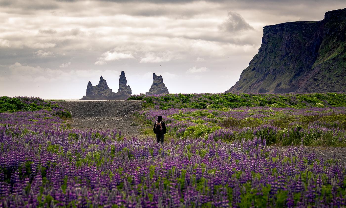 plage vik islande