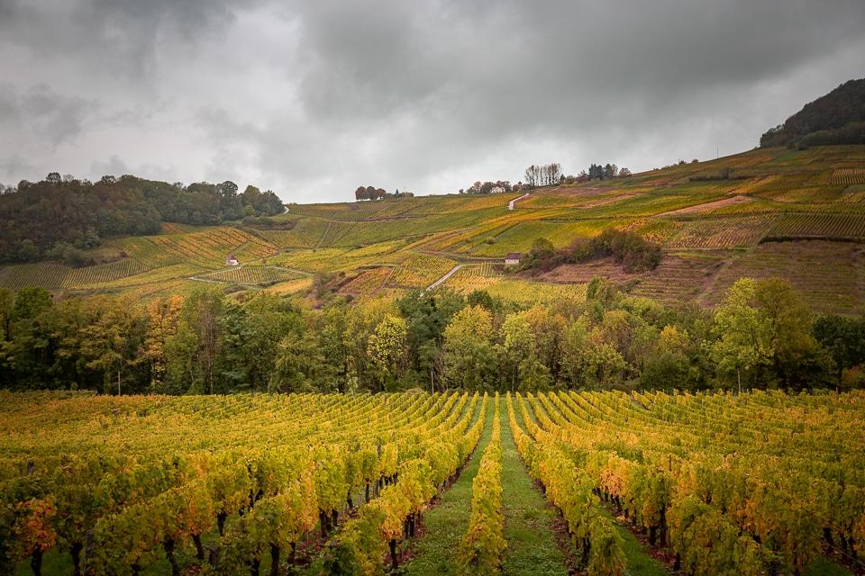 chateau-chalon-vigne-automne