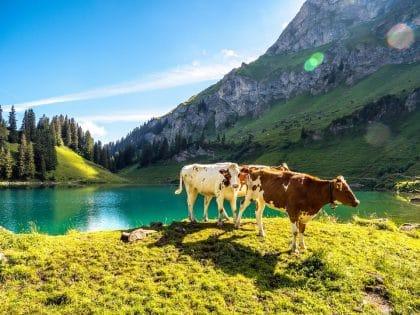 treks suisse lac lioson