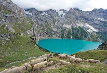 via alpina treks suisse