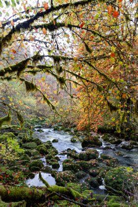forêt rivière automne