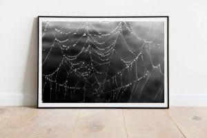 goutelettes dans un toile d'araignée