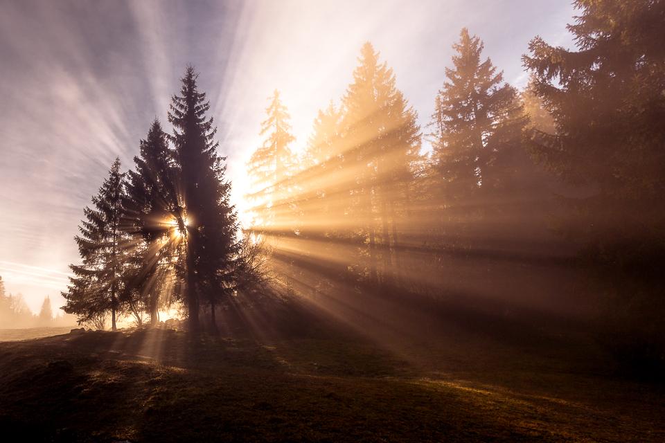 Rayons de soleil dans les sapins