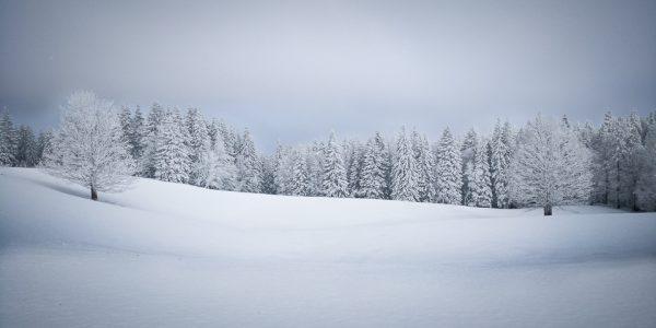 arbres enneigés dans le Doubs