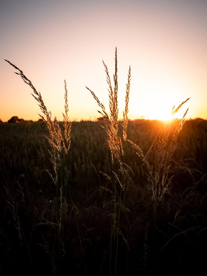 coucher de soleil dans les blés