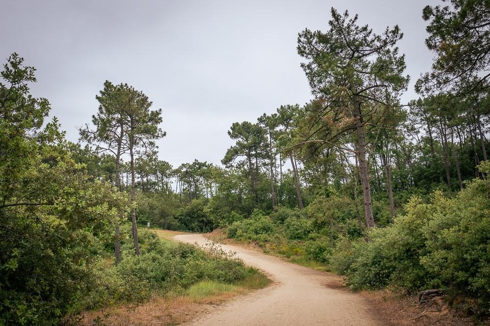 forêt d'olonne