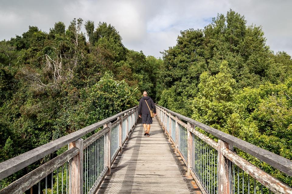 passerelle dans le parc national du dorrigo