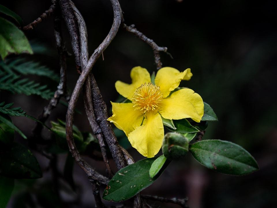 fleurs dans les parcs du gondwana