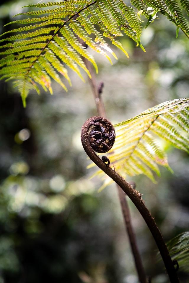 forêt du gondwana