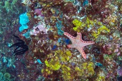 plongée en australie étoile de mer