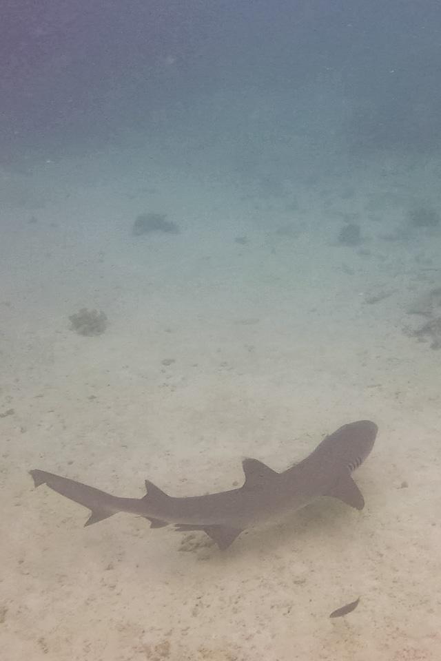 plongée en australie requin